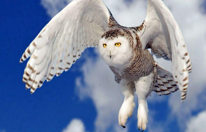 Daftar Harga Burung Hantu Di 2021 Burung Hantu Burung Burung Hantu Barn Owl