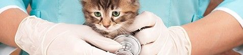 Pet health insurance ad.