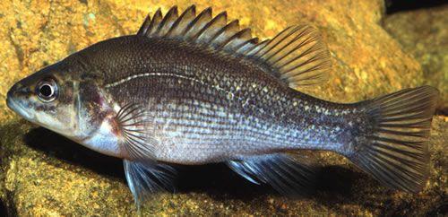 19 best mahogany glider images on pinterest sugar for Freshwater fishing in massachusetts