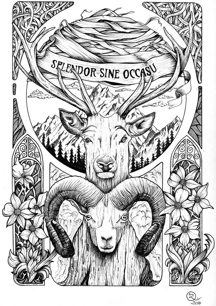 British columbia  illustration, ink, ram, stag, flower, grass, banners