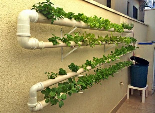 Hidroponia é o tipo de cultivo onde raízes das plantas ficam submersas em água com alguns nutrientes que farão com que elas se desenvolvam sem precisar de terra. A vantagem é que o cultivo é simple…