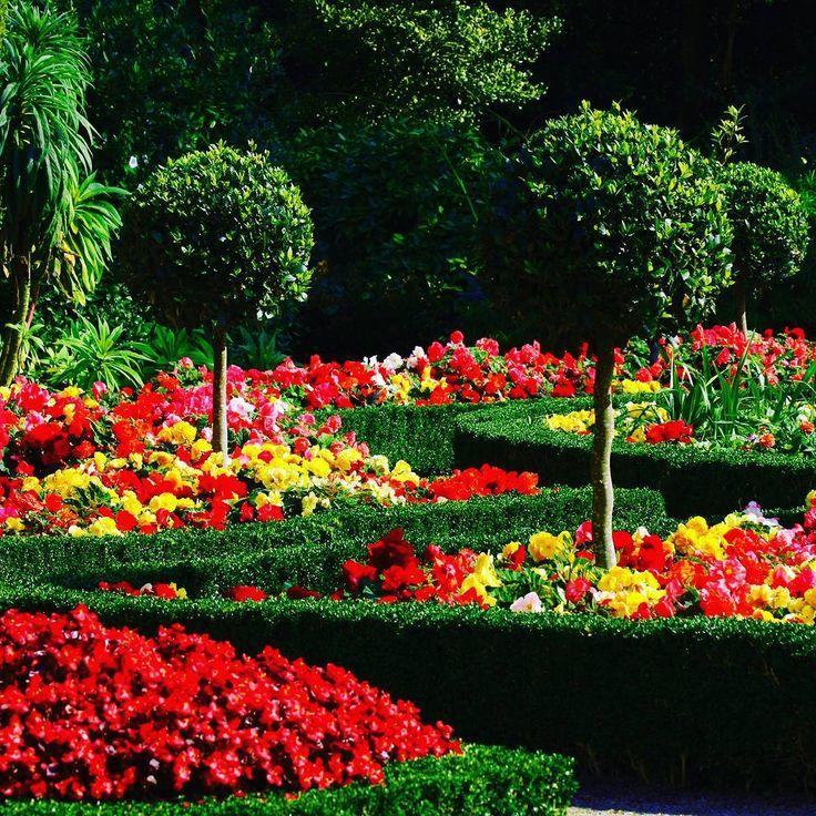3 Likes, 2 Comments - Flowers & plants beautiful (@mohammadplant_samadpoor) on Instagram