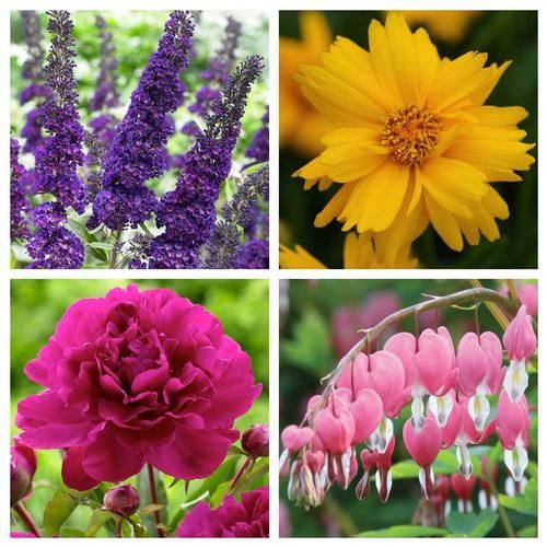 60 Deer Resistant Plants For Your Garden