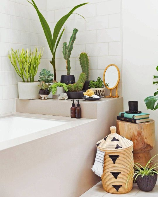 Shower plants are a big trend right now. Circulating clean air and bringing a freshness to a often neglected place is why we love them.