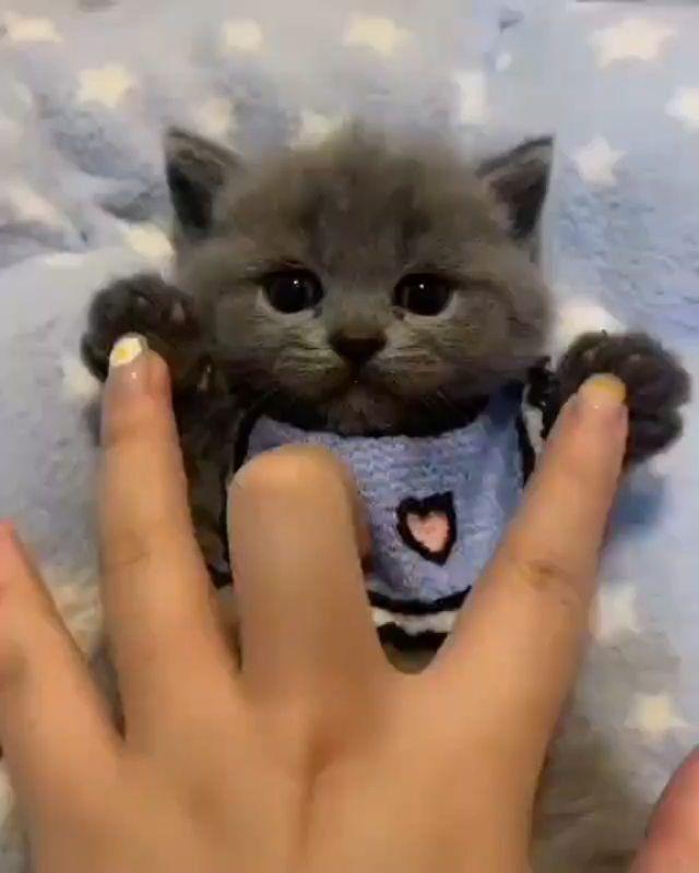 Kumpulan Video Kucing Lucu On Instagram Kaya Boneka Follow Parakucing Id Biar Tidak Ketinggalan Vide Anak Kucing Gemas Bayi Hewan Lucu Kucing Bayi