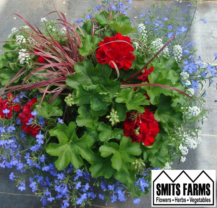 Best Flower Combinations For Hanging Baskets : Best images about hanging baskets on