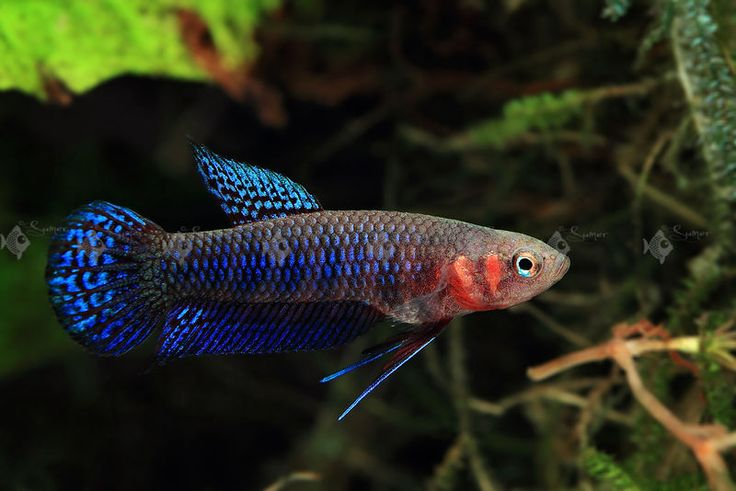 17 best images about betta on pinterest auction photo for Betta fish water temp