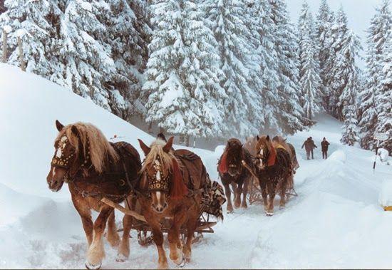 Vila Iulia - Cazare Vatra Dornei: Sarbatori de iarna in Vatra Dornei