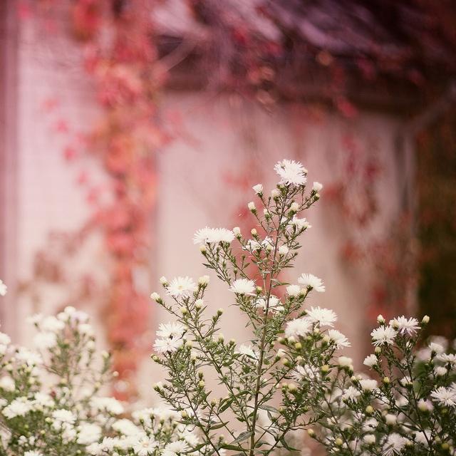 Beautiful plants surround me