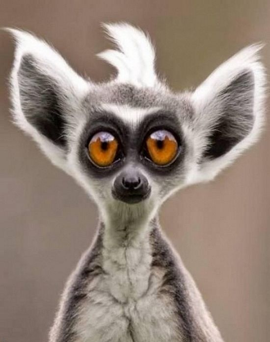 This is exactly how I think I look when I have any ID photo taken. Usually, thankfully, I'm mistaken. Turns out my eyes are blue. :-) (Lemur Lol Z by Koosricardo).