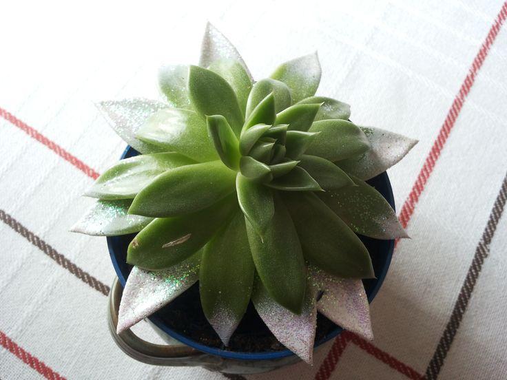 Glitter Plant.