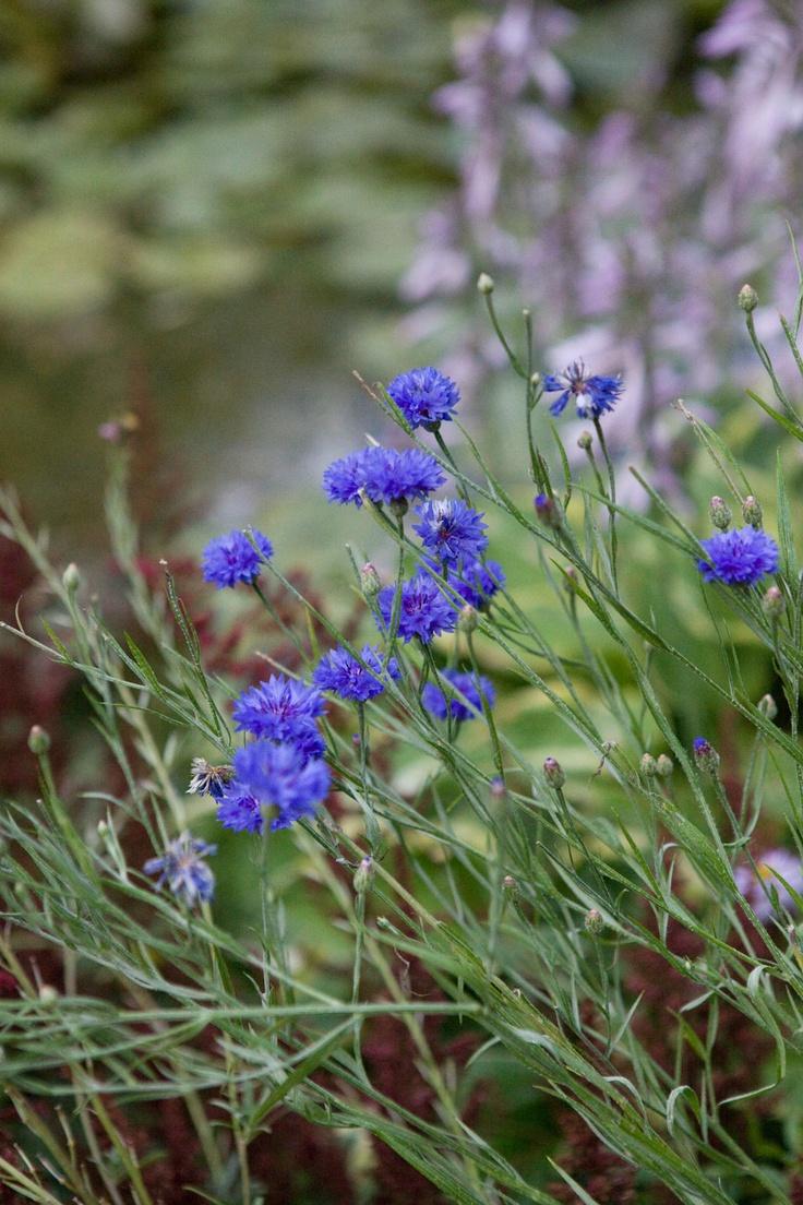 Monet's Garden; France