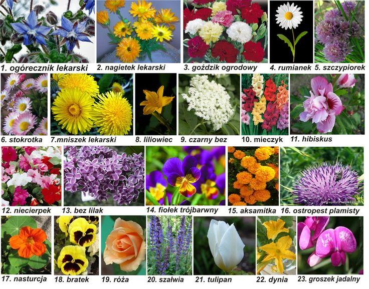 Kwiaty jadalne - jako dekoracja i dodatek kulinarny