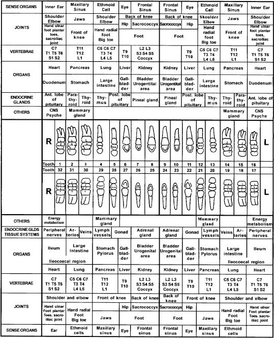 #Teeth/Gum #Reflexology Tooth chart: It why brushing our teeth and massaging our gums is so important!