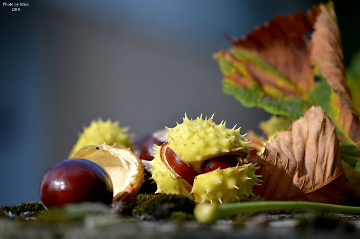 autumn by Mihály Metz on 500px