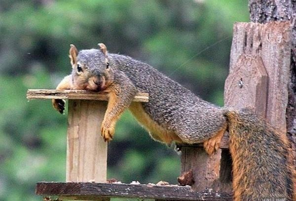 Once again I must wait for the nuts to arrive... this is getting old, very old...