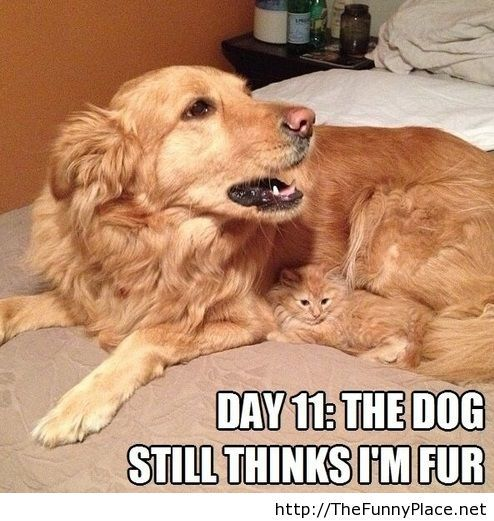 Funny camouflage - Funny Pictures, Awesome Pictures, Funny Images and Pics