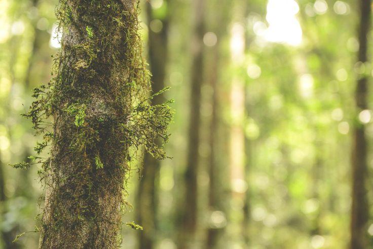 Flourishing Lichen at Barrington Tops, Australia | ldw photography