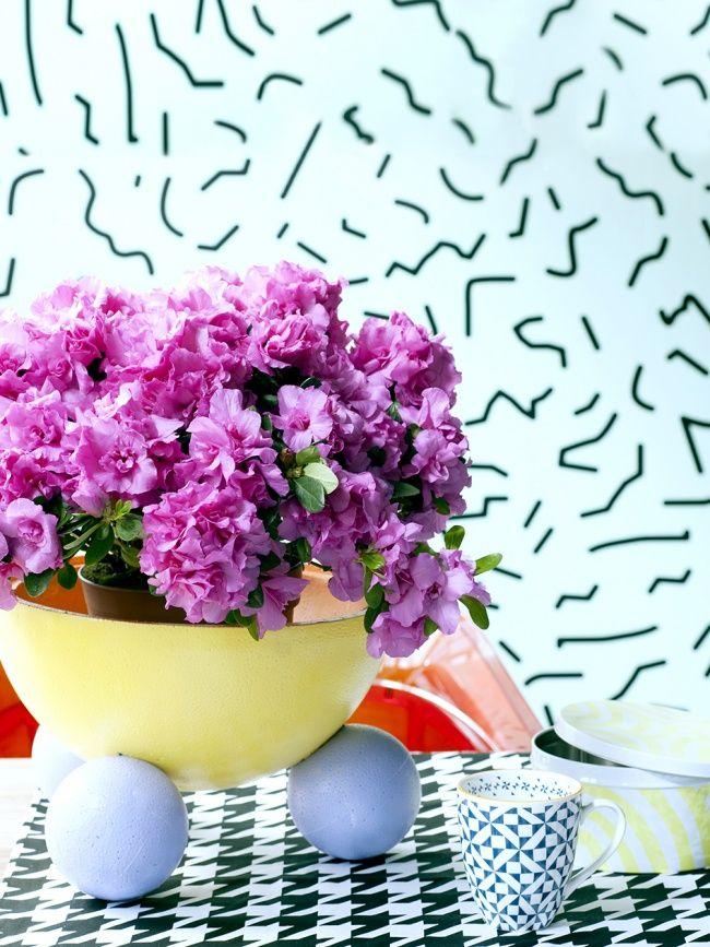 Blühende Zimmerpflanzen die besten 17 ideen zu blühende zimmerpflanzen auf unter freiem himmel kleine
