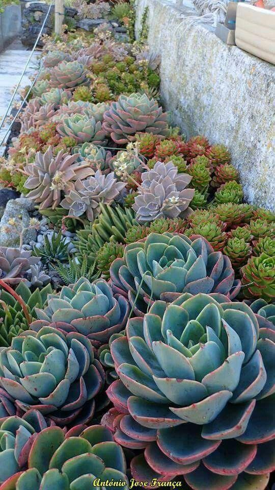 Consejos para el diseño de jardines pequeños #Paisajismojardinespatio