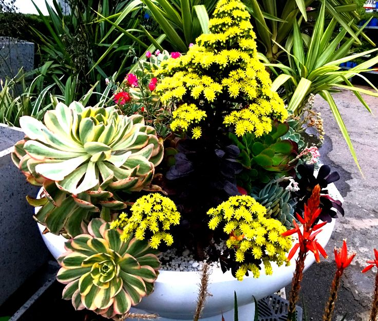 One of many Beautiful Succulent Displays that you can expect to see at www.potsandmore.net.au
