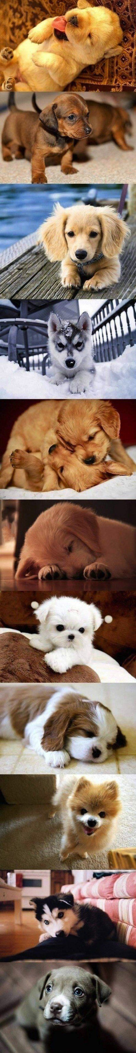 Cuteness Overload. When I grow up, I'm going to foster puppies. It's inevitable.