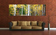 Wall Art Canvas Print Picture Aspen Trees Panoramic View -Unframed