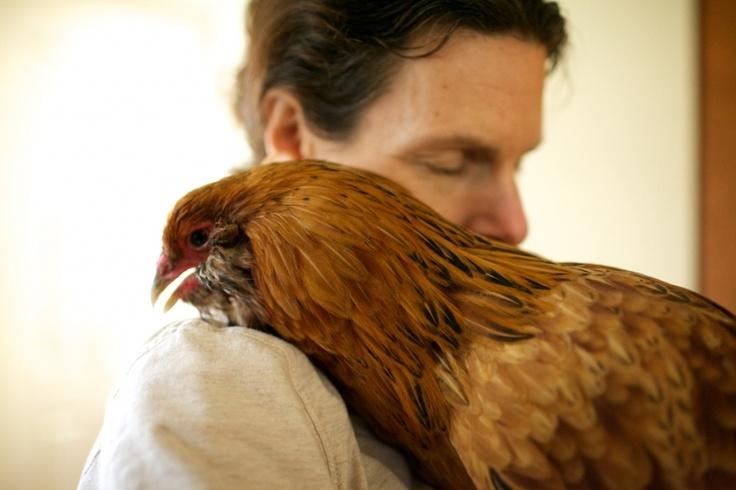 pretty auracona...: Pretty Auracona, Lovely Things, Chickens Eggs Chicks, Pretty Chicken, Bird Brains