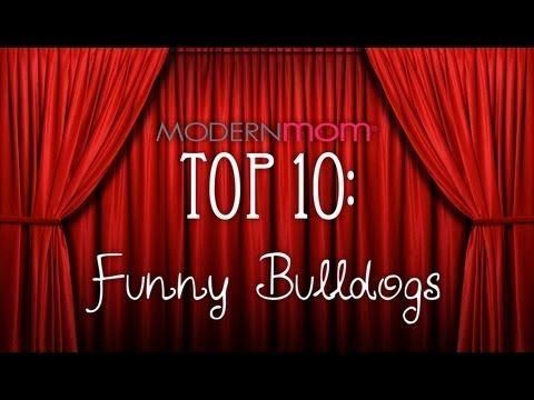 Top 10 Funny Bulldogs doing what they do best... being adorable.  If there is anything better than a bulldog enjoying a trampoline, I want to know what it is!