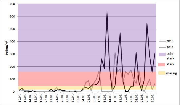 Figur 1: Gräserpollensaison in Luzern in den Jahren 2015 und 2014. Im Jahr 2015 wurden bis Ende Mai elf Tage mit sehr starkem Pollenflug gemessen, während im letzten Jahr bis zu diesem Zeitpunkt nur vier Tage auftraten.