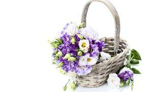 Wallpaper flowers, petals, purple flowers