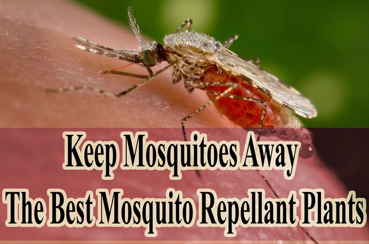 What Foods To Eat To Keep Mosquitoes Away