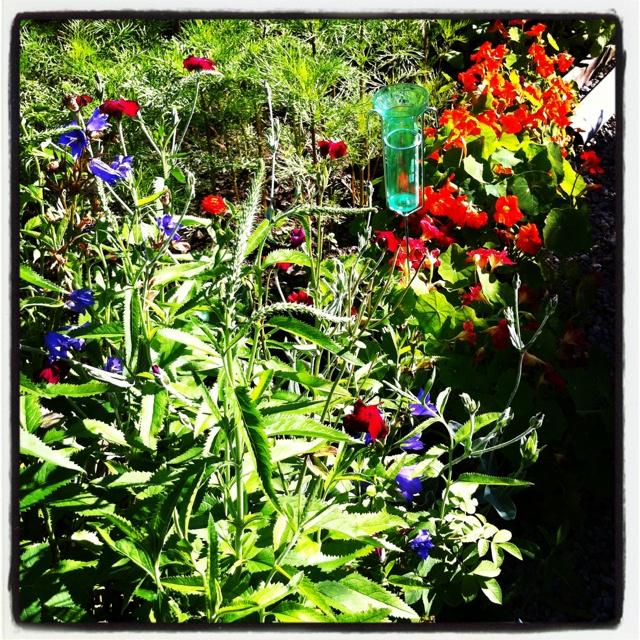 Ännu mer blomster