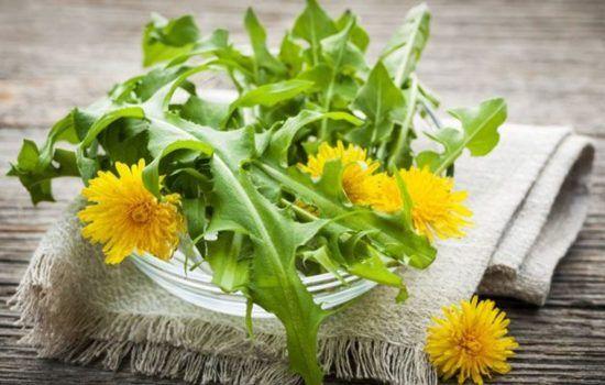 Листья одуванчика: как применять, польза, лечебные свойства,