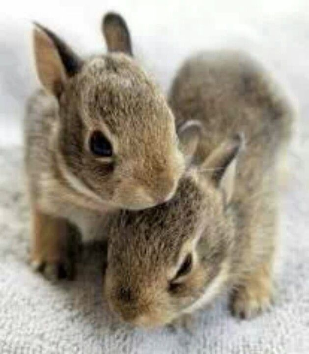 love bunnies!                                                                                                                                                                                 More