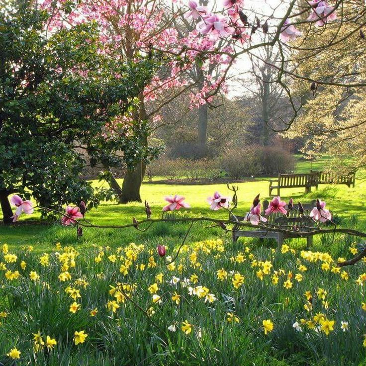 Daffodils and Magnolia Trees at Kew Gardens,London by Laura Nolte