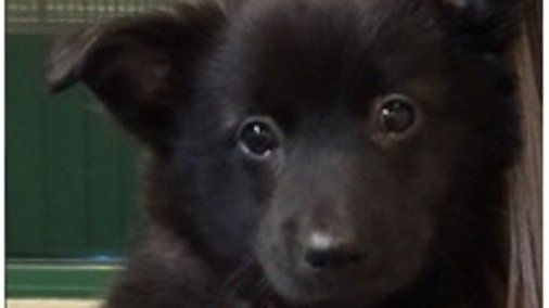 Petition · Jeff Hall, Chief Deputy District Attorney for Salt Lake County: Justice for Moose- a 3 month old border collie puppy who was tortured and killed. · Change.org
