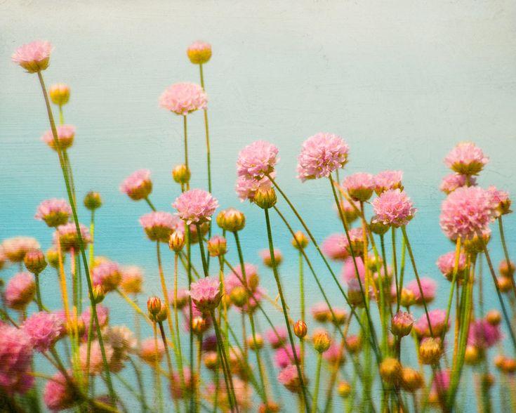 Flower Photograph, Nursery Decor, Home Decor, Pink Meadow Flower Photo, Nature Photography. $18.00, via Etsy.