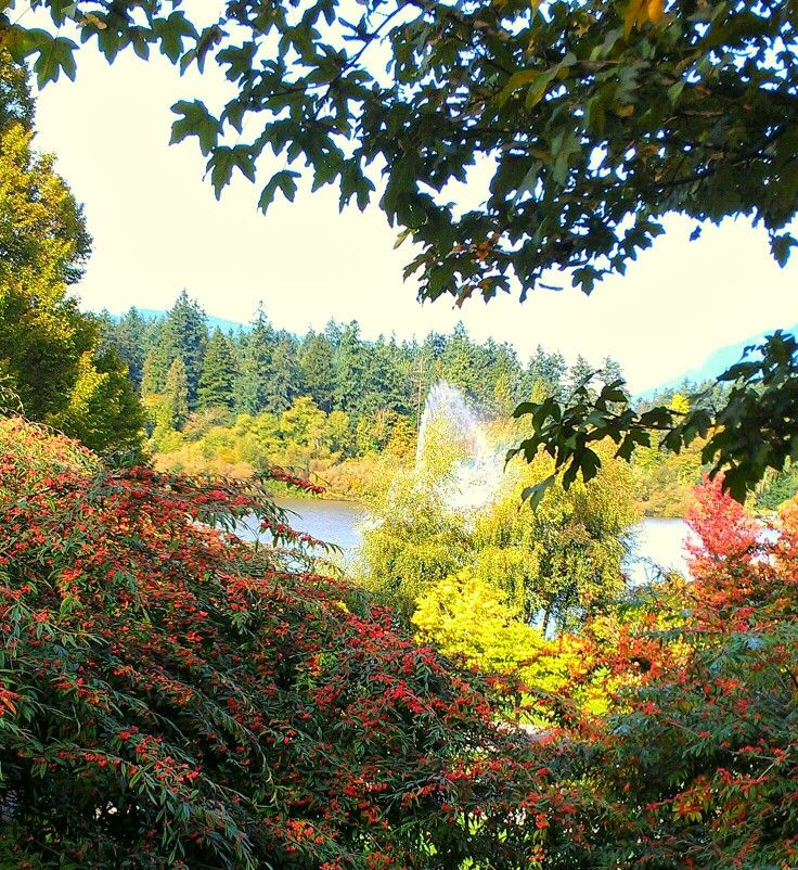 Stanley park, Vancouver BC. Photo by JerrySmith