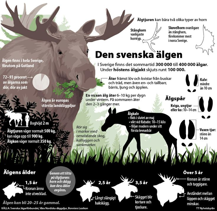 A grapich about the swedish moose.
