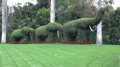 Słonie cięte z roślin