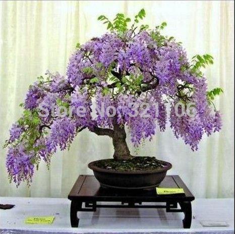 Barato decoração de bonsai, comprar qualidade decoração de bonsai diretamente de fornecedores da China para decoração de bonsai, China bonsai, bonsai succulents