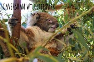 Caversham Wildlife Park, Western Australia - Lo On The Go