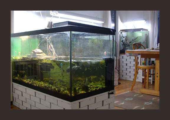 Diy Aquarium Stand Cinder Blocks Woodworking Projects