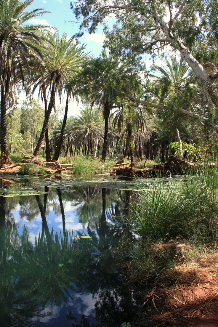 The sacred site of Millstream - an oasis in the desert sacred to the Yindjibarndi people of The Pilbara Region.  The palms are unique to this area of Australia and grow nowhere else.  This is part of a much larger delta of  freshettes of running water that connect one with the other.