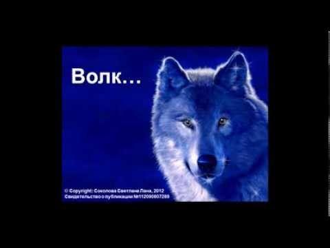 Стихи о любви. Волк...