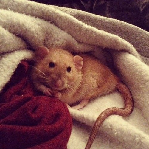 """Marlene seeing Peter in Animagus form in the common room: """"Oh, James what an adorable mouse! Is he yours?"""" """"Yes, but he's a rat not a mouse"""" replied James """"Well he's an adorable rat. So, what's his name?"""" """"Umm Meter Nettigew"""" said James quickly  """"funny that sounds just like (bell rings) ,oh, gotta run to charms"""" after peter transforms back: """"Really Prongs, Neter Mettigrew that's the best you can do? she'll never guess it's me now."""""""