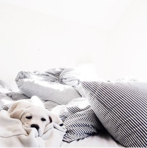 cute puppy + minimal bed