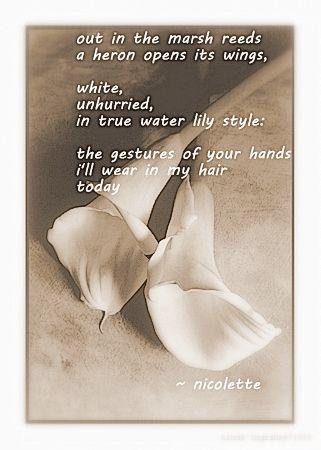 The 21 best poetry of flowers images on pinterest flower poetry heron nicolette van der walt mightylinksfo