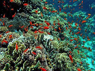 Kumpulan Ikan | Sebutkan 10 Hasil Laut Yang Kamu Ketahui?